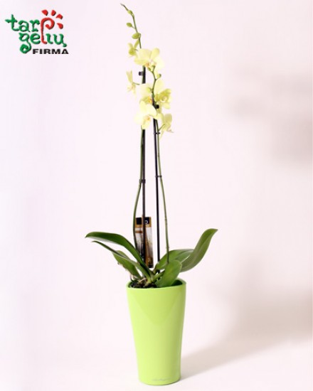 Orchid and planter DELTA