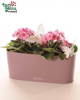 Mini Orchid & Planter