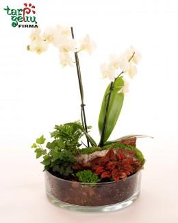 Plants Arrangement