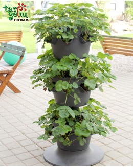 Strawberries & Planter