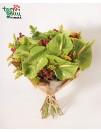 Bouquet of Anthurium